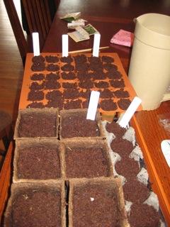seedstarting2