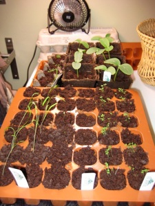 newseedlings