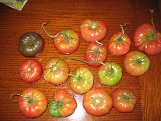 tomatohaul