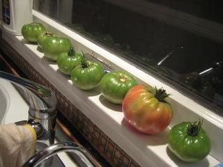 tomatoeswindow
