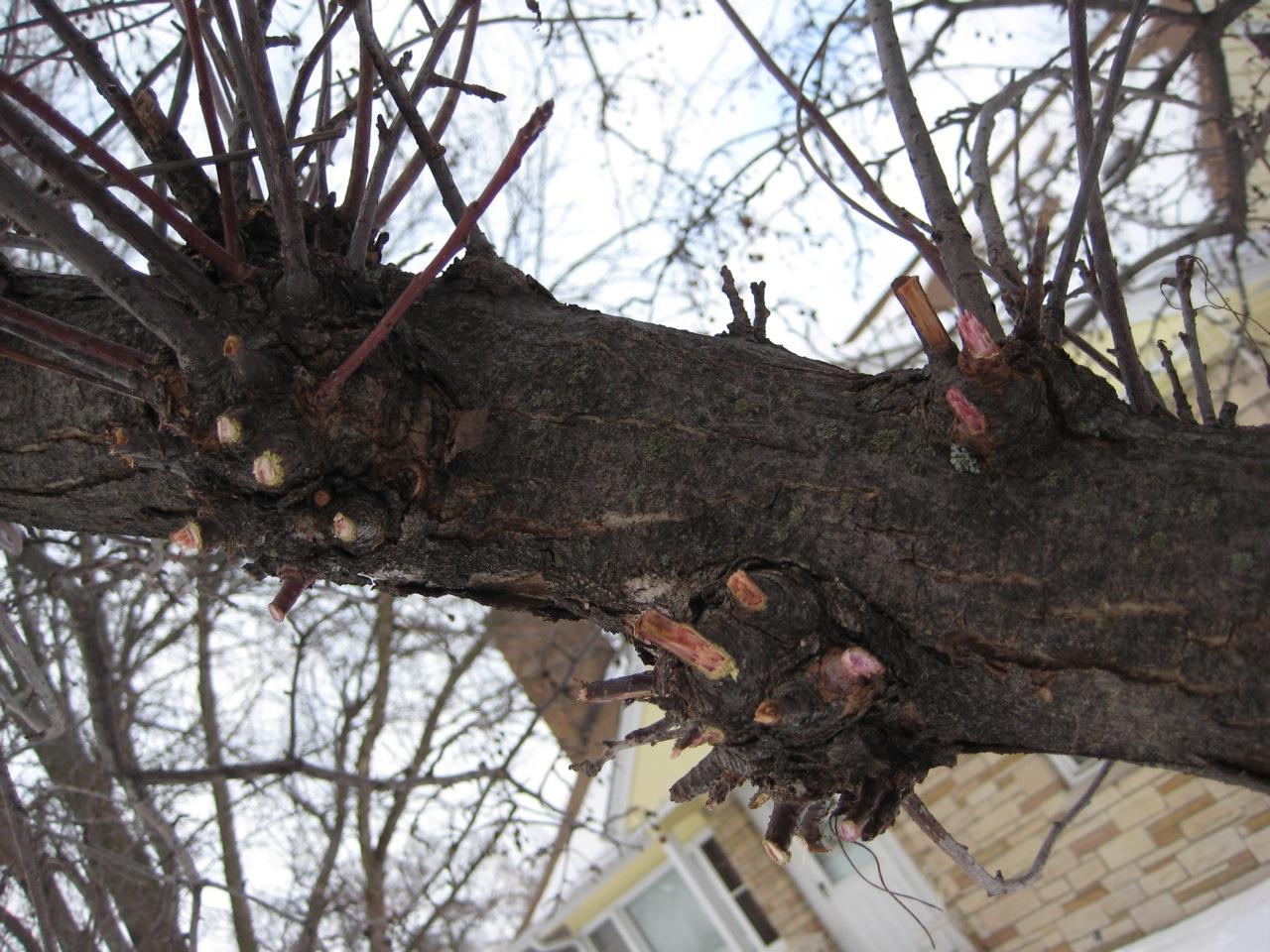 Pruning My Crabapple Tree Stacking Functions Garden