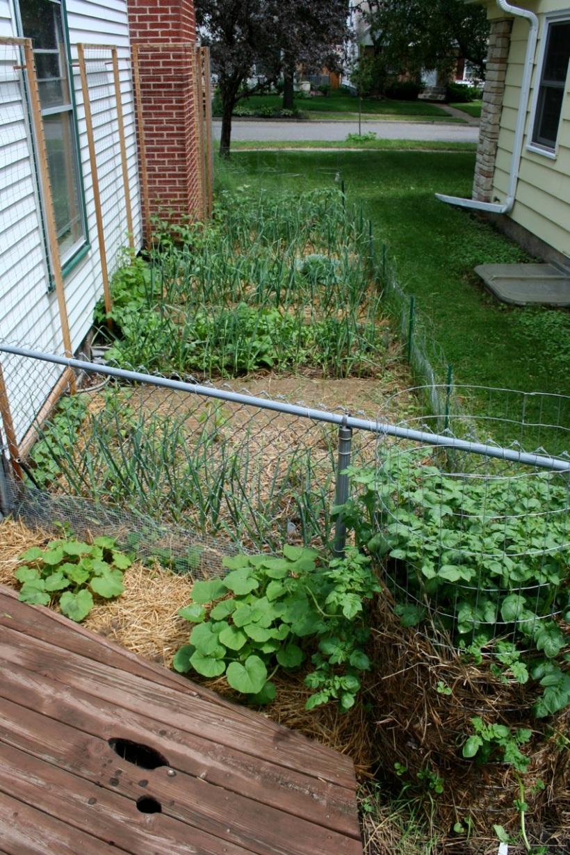 my urban garden