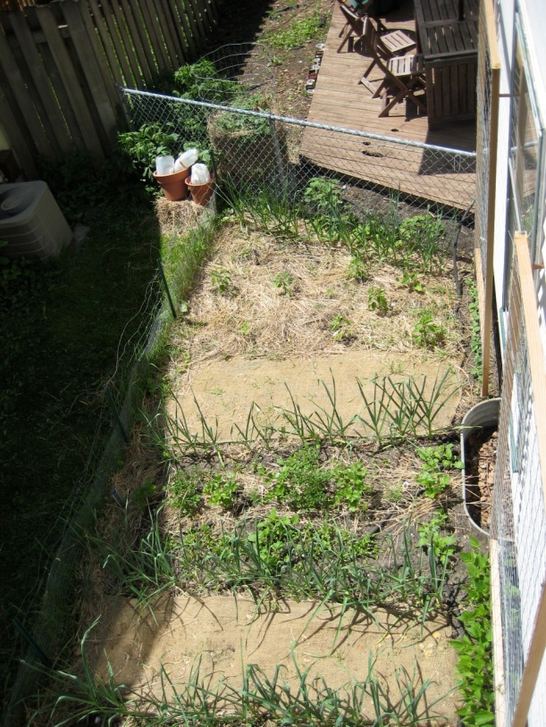 another view of the garden from above