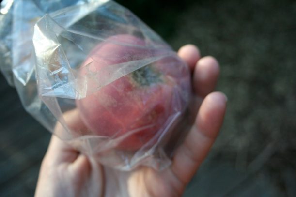 bagged apple