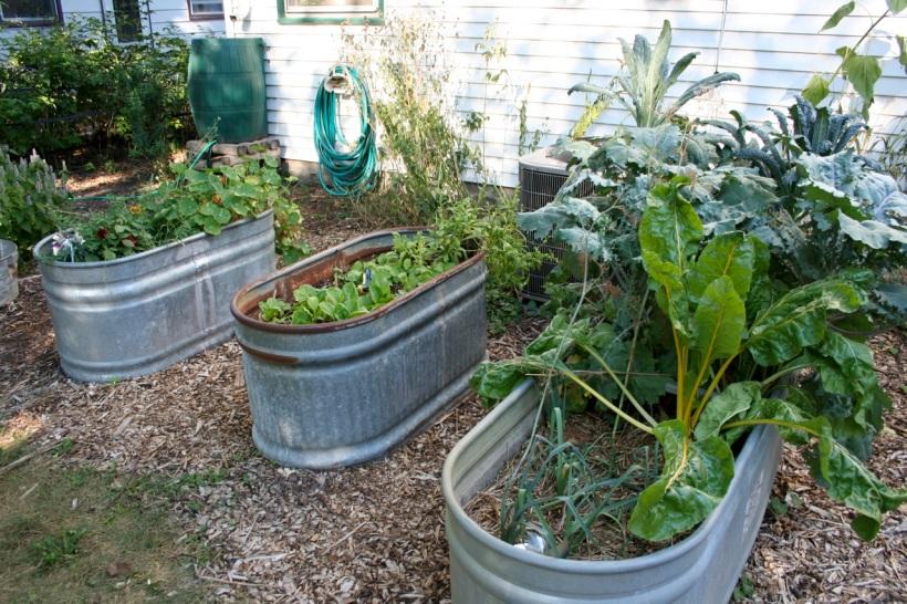 stock tank gardens