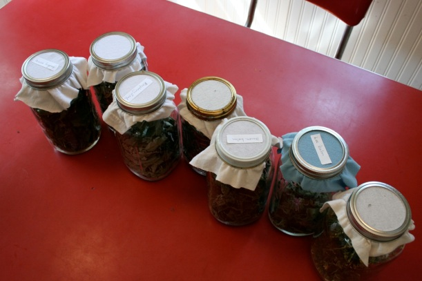 quart jars of dried herbal tea