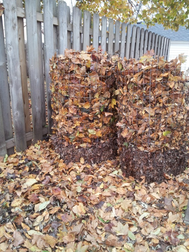 making leaf mold