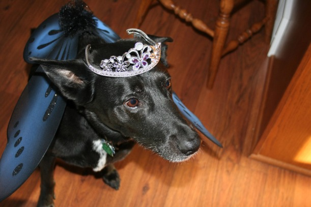 Blake the fairy dog