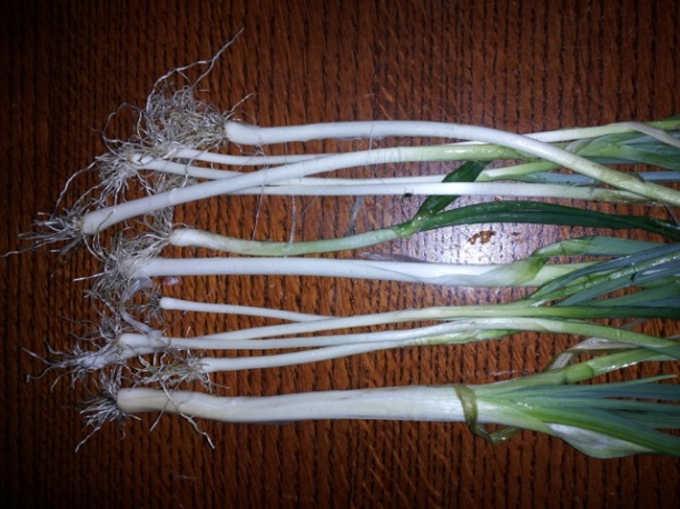 blanched leeks