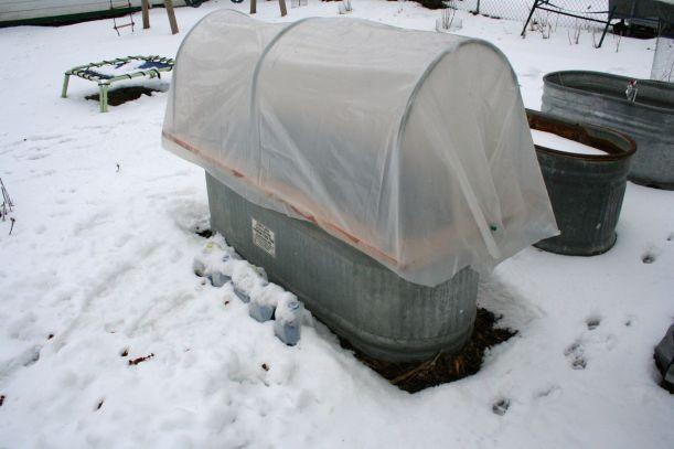 Temporary hoop house on a stock tank garden