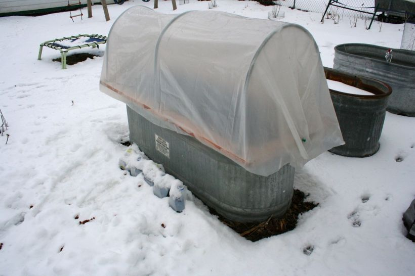 Temporary hoop house on a stock tank garden