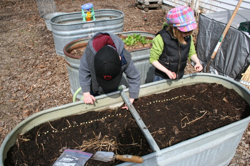 Rowan and Anneke plant peas in the stock tank