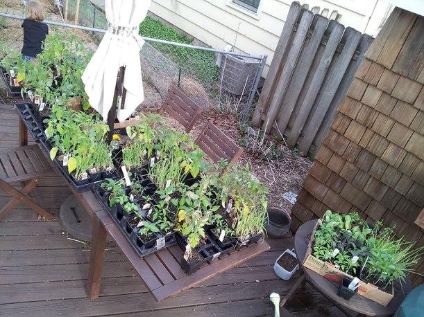 Plants for Master Gardener event