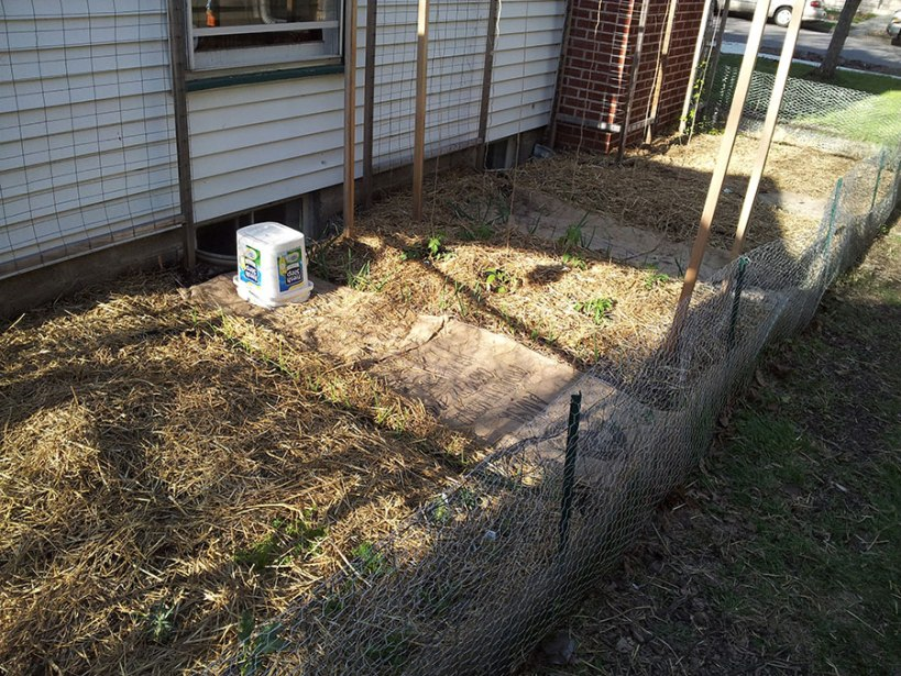 Garden: planted! Via New Home Economics