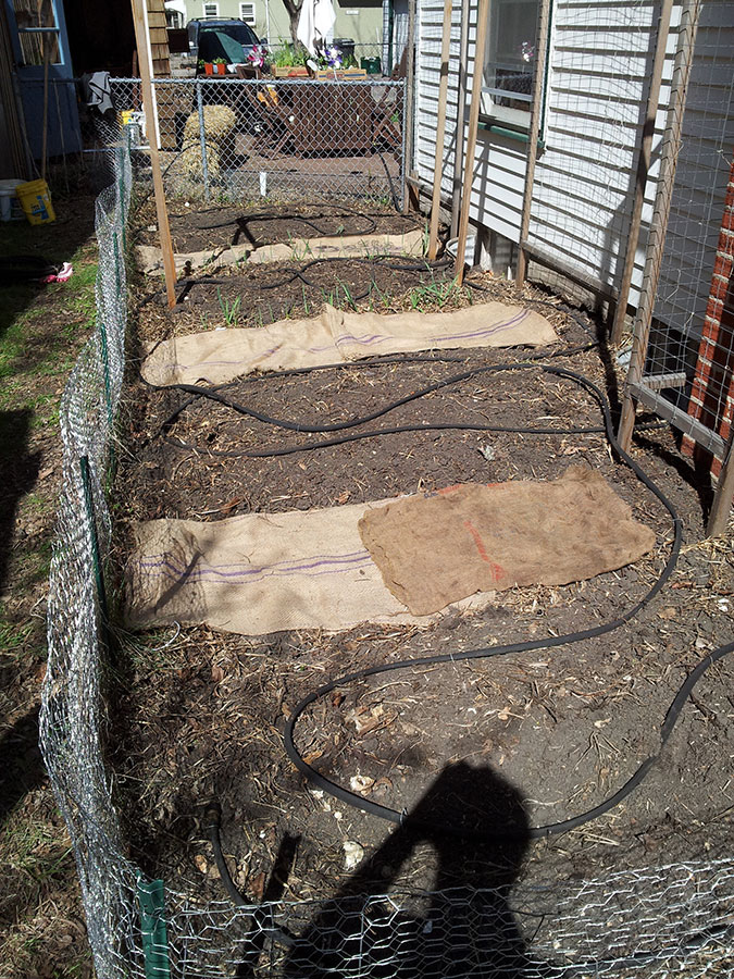 Laying out soaker hoses, via New Home Economics