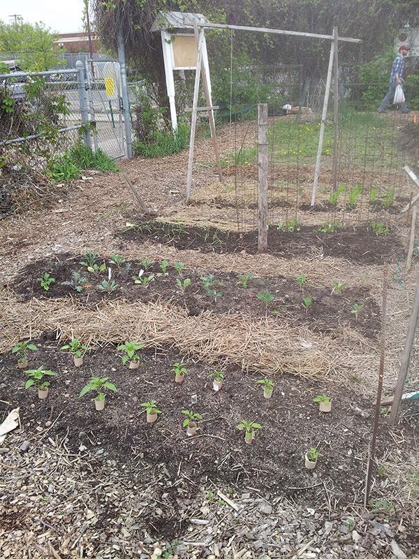 Community garden plot, 10'x20'