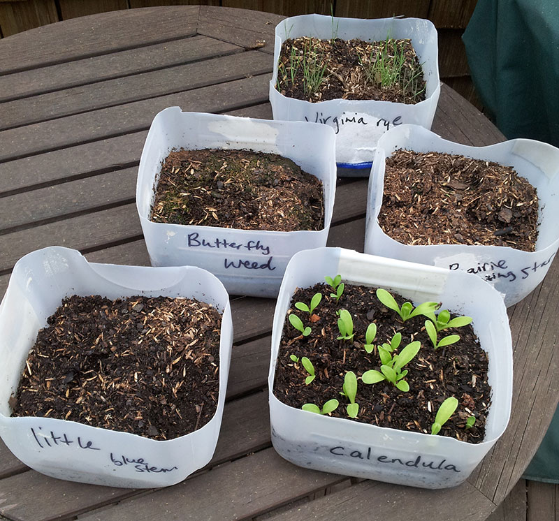 Winter seed sowing update