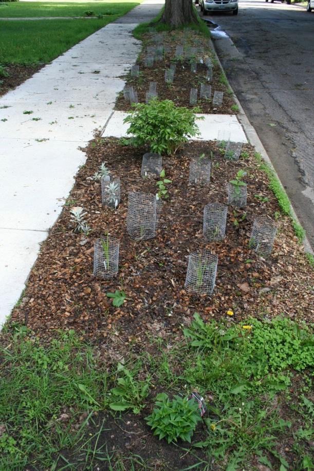 boulevard_planted