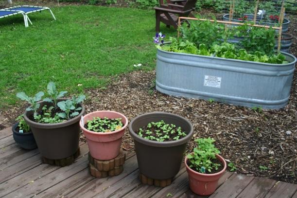A pop-up garden