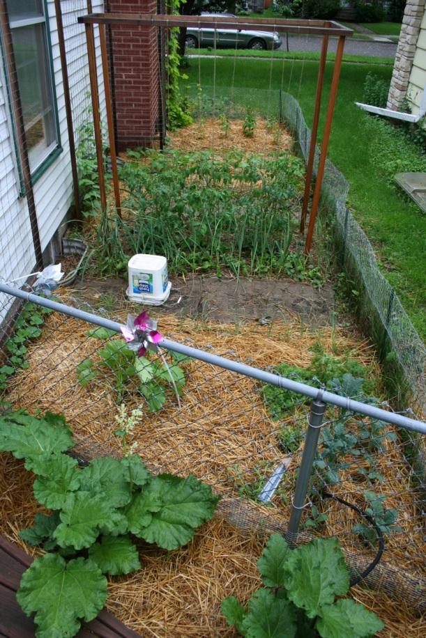 Overview of vegetable garden on June 21, 2013
