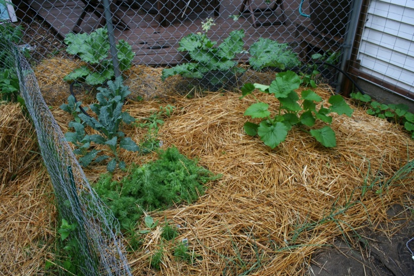 Kale, herbs, zucchini, acorn squash