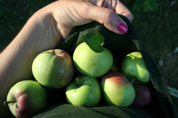 Apples, via The New Home Economics
