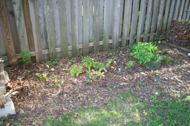 Another dry shade garden, via The New Home Economics
