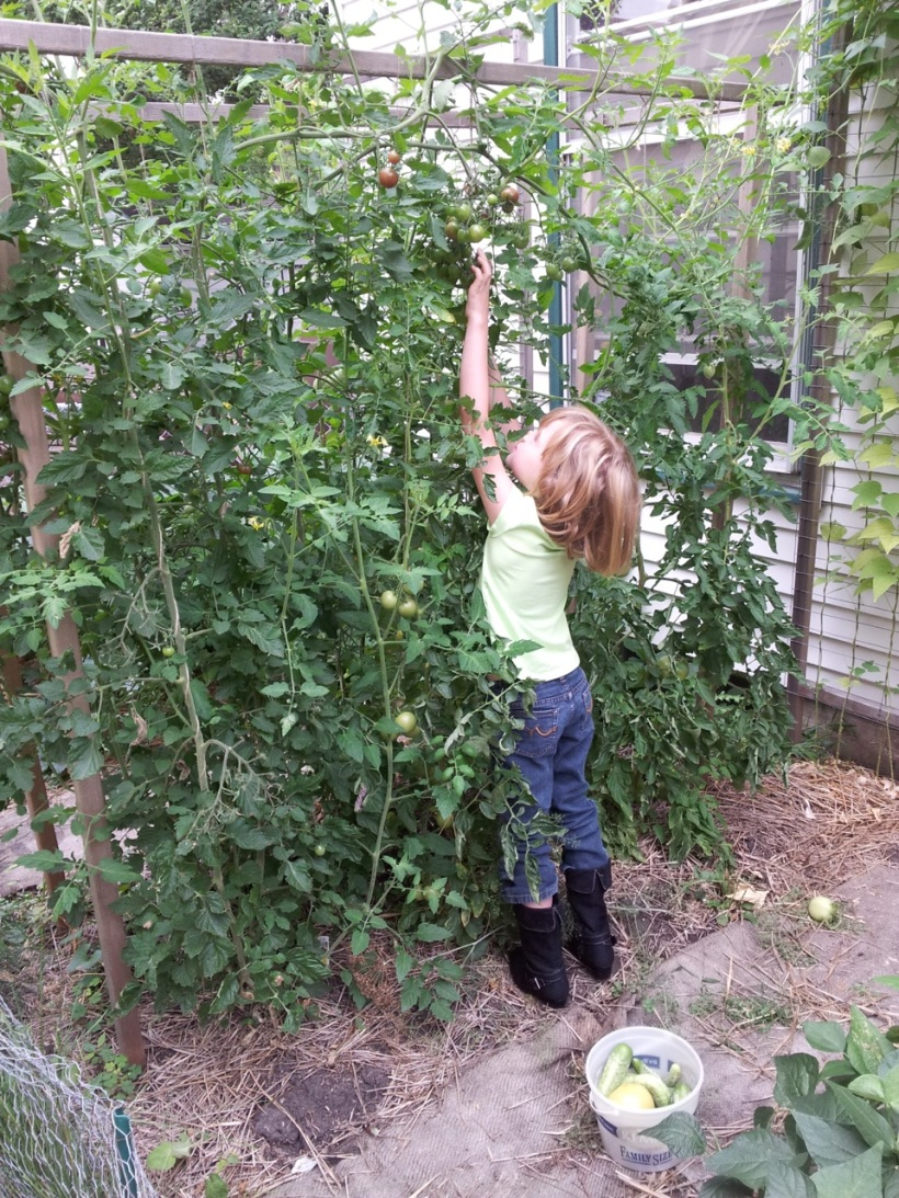 Tomato harvesting, via The New Home Economics