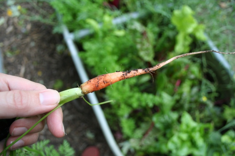 Tiny carrot, via The New Home Economics