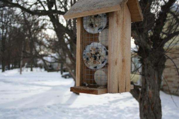 Homemade suet for birds
