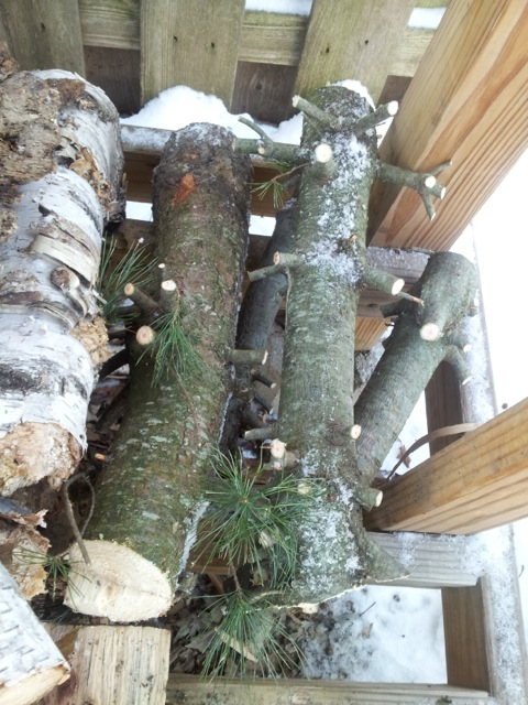 Christmas tree firewood