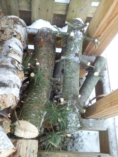 Christmas tree firewood