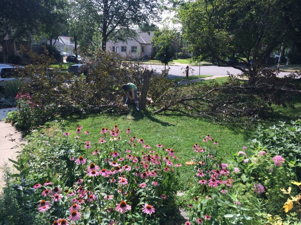 Cutting down a crabapple tree