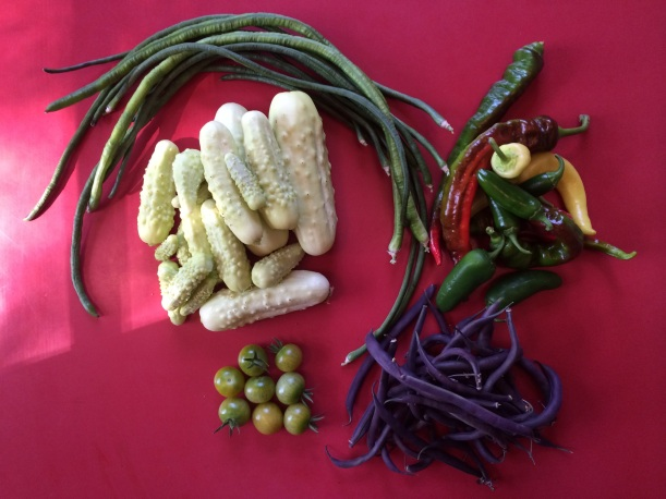 A picking of vegetables