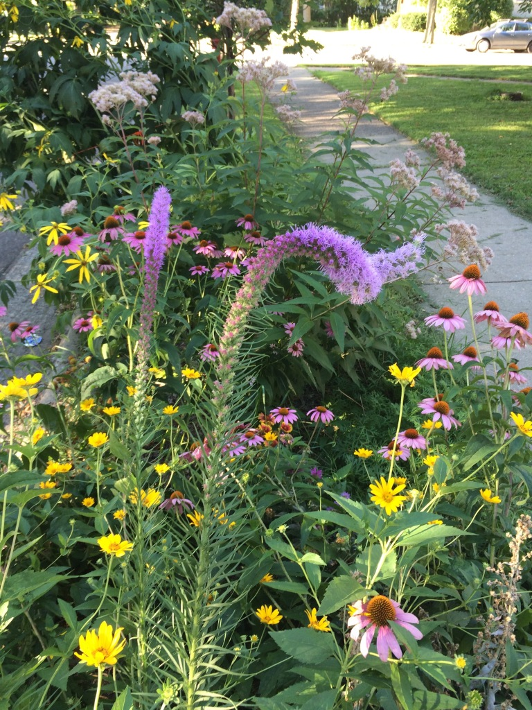 Boulevard prairie garden