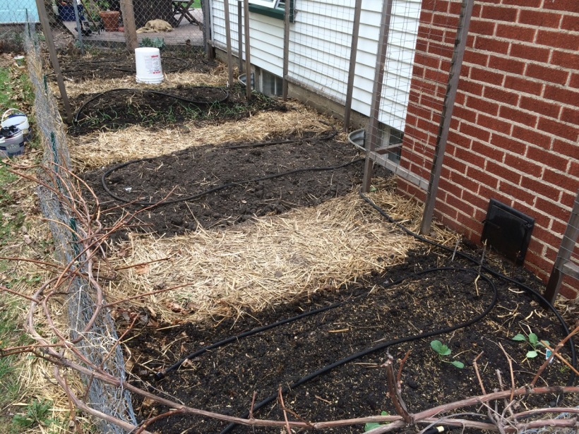 A northern vegetable garden, prepped