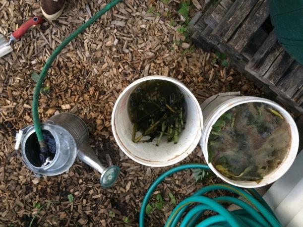 Comfrey Compost Tea