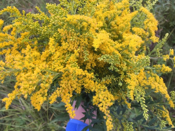 Goldenrod, via The New Home Economics