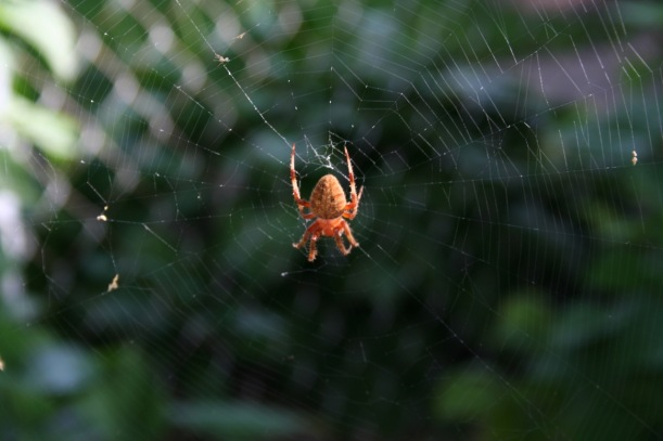 Spider, via the New Home Economics