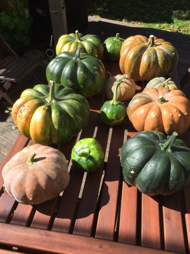 Musquee de Provence pumpkins, via The New Home Economics