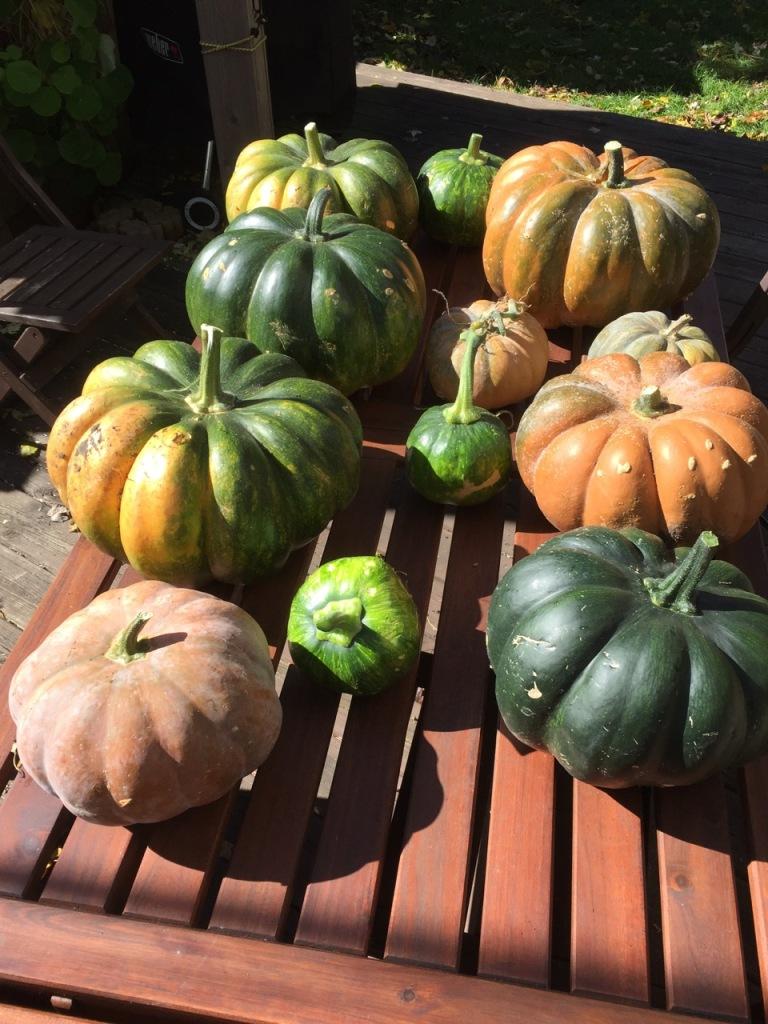 Musquee de Provence pumpkins, via The New Home Economics