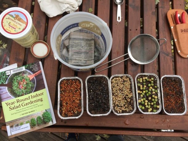 Soil Sprouts - getting started, via The New Home Economics