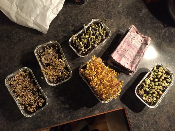 Newly sprouted soil sprouts, via The New Home Economics