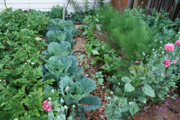 Main vegetable patch, via The New Home Economics