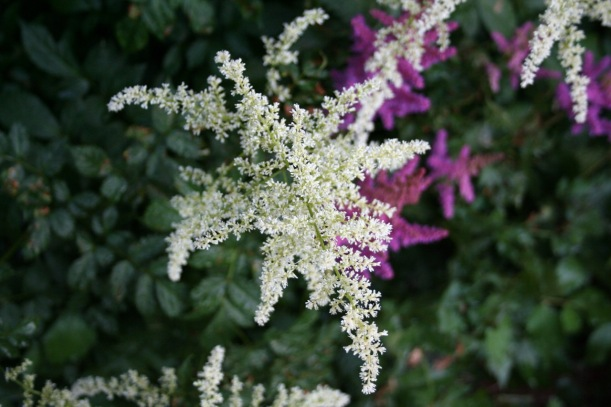 Astilbe, via The New Home Economics