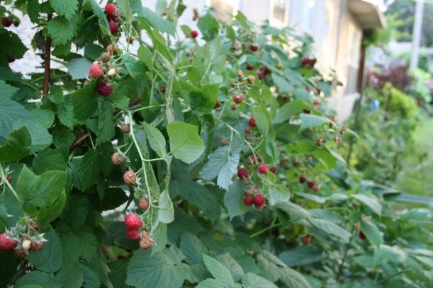 Raspberries, via The New Home Economics