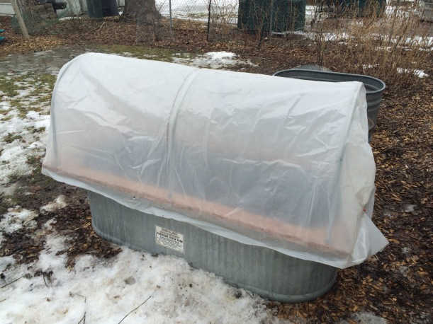 Hoop house on a stock tank for early spring greens, via The New Home Economics