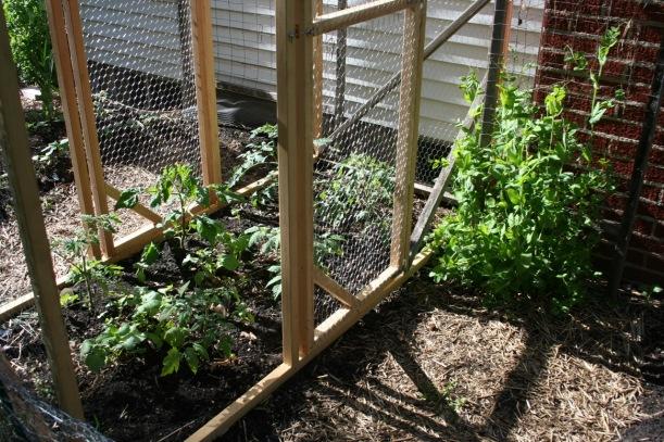 Tomato fortress in progress, via The New Home Economics