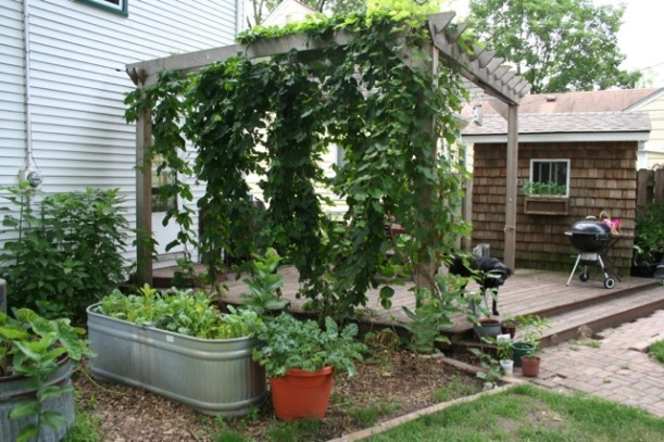 Grapevine and hops arbor, via The New Home Economics