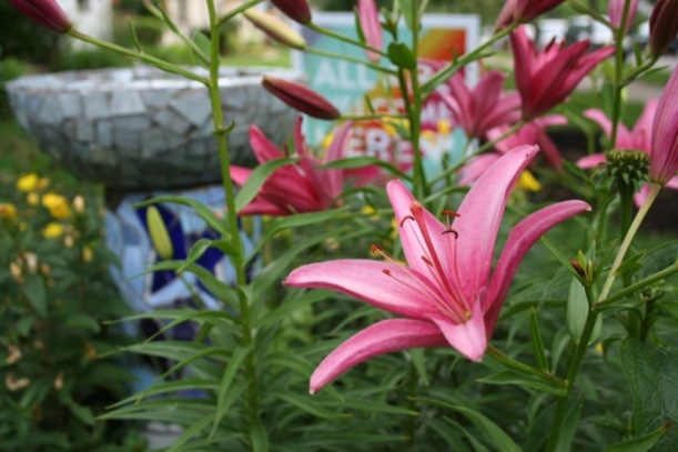Asiatic lily, via The New Home Economics